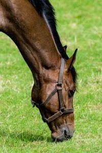 horseback-riding-384930_1280